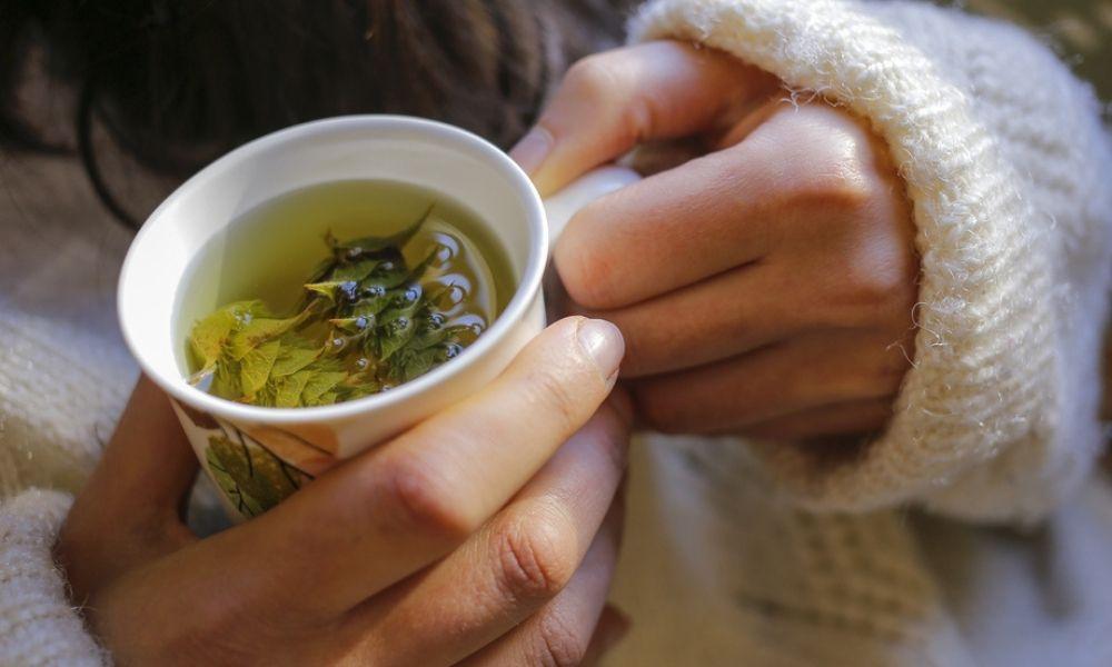 Plantas medicinales para prevenir y tratar gripes y resfriados