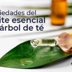 Propiedades y usos del aceite del árbol de té